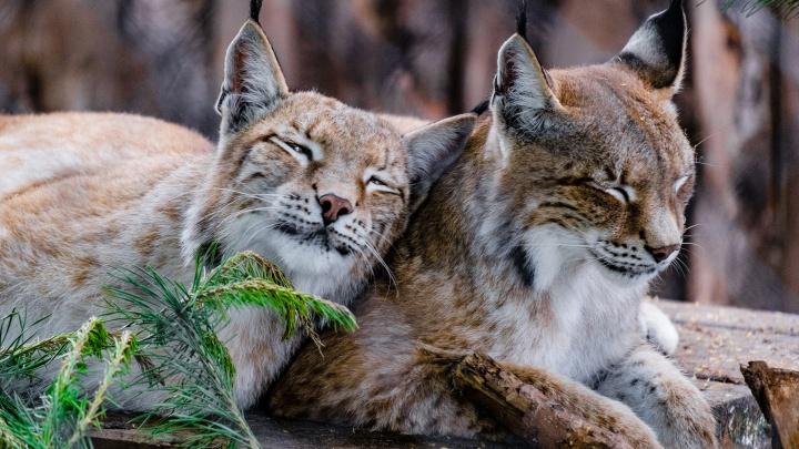 Пермский зоопарк открывают для посетителей