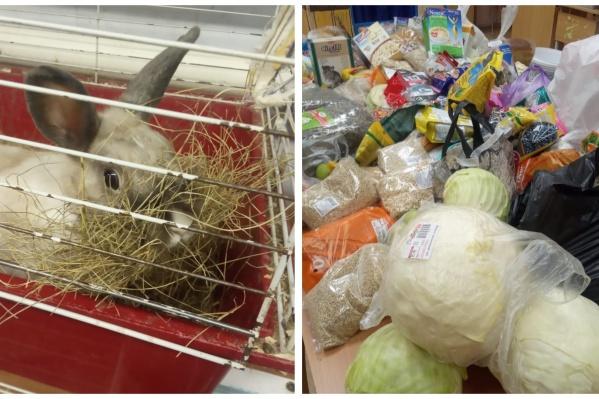 Екатеринбуржцев попросили помочь животным, которые остались без еды из-за закрытия школ и садиков
