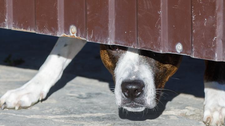 «Случится беда — найдутся и деньги, и время»: в Волгограде своры собак держат в окружении несколько школ