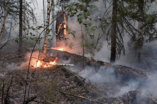 Пожары в Богучанском районе в 2019 году