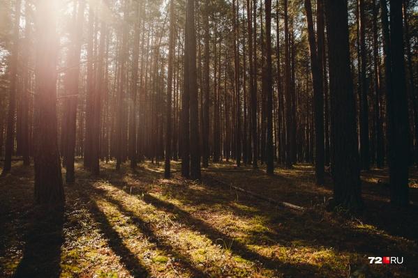 Женщины больше суток находились в лесной и болотистой местности и не смогли сами найти дорогу домой