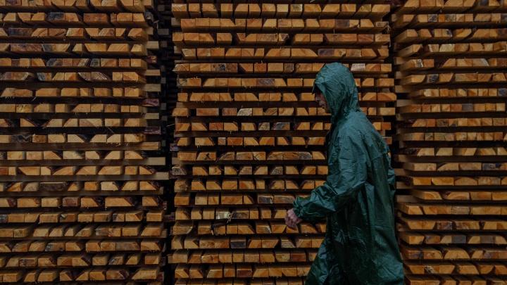 Из Кузбасса вывезли лес на несколько сотен миллионов. Рассказываем, куда именно