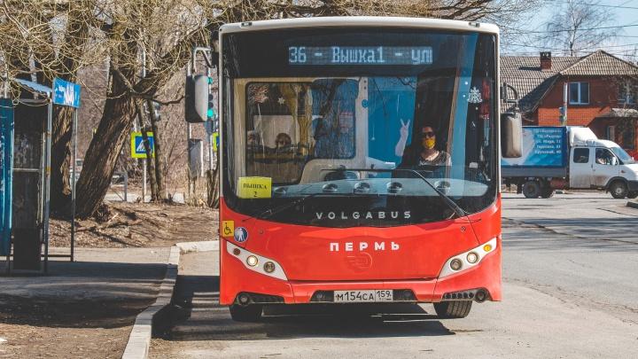 В Перми добавят рейсы на восьми автобусных маршрутах