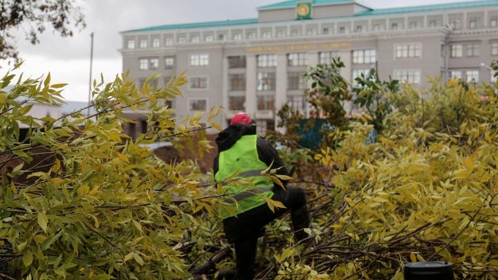«Не думайте, что мы такие варвары»: в Уфе на Советской площади началась массовая вырубка деревьев