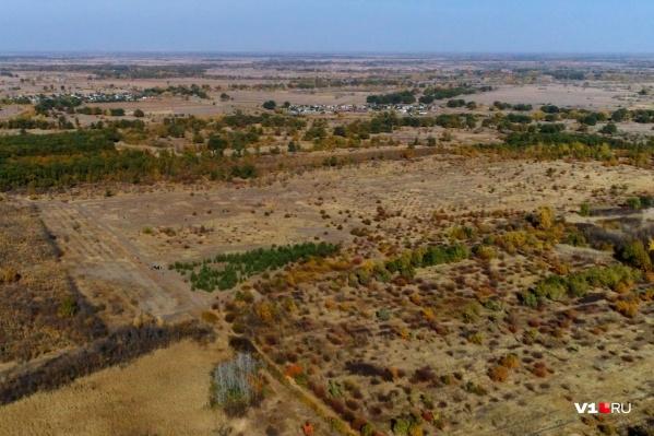 В лесном хозяйстве подобрали 20 участков, на территории которых можно высадить молодые деревья