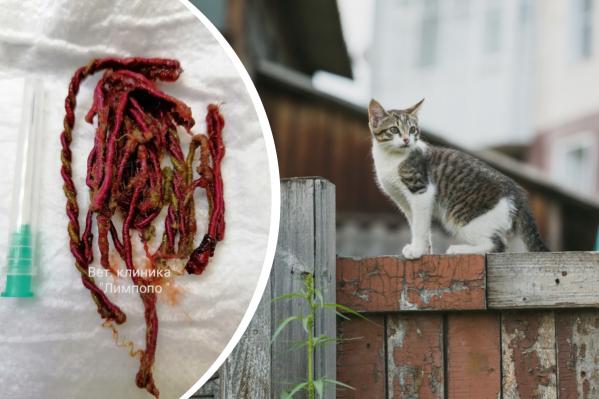 Котенок остался жив благодаря ветеринарам