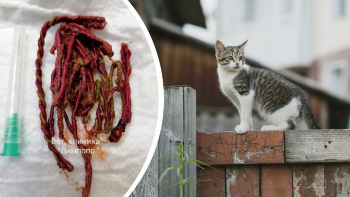 Ветеринары вытащили из котенка стропу от мячика: видео не для слабонервных