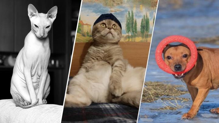 С них лапки, с вас лайки: продолжаем знакомиться с животными-блогерами из нижегородского Instagram
