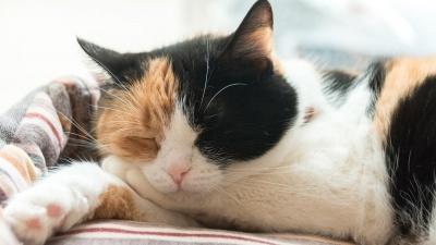 Без кота и жизнь не та: фоторепортаж из приюта для животных «Надежда»