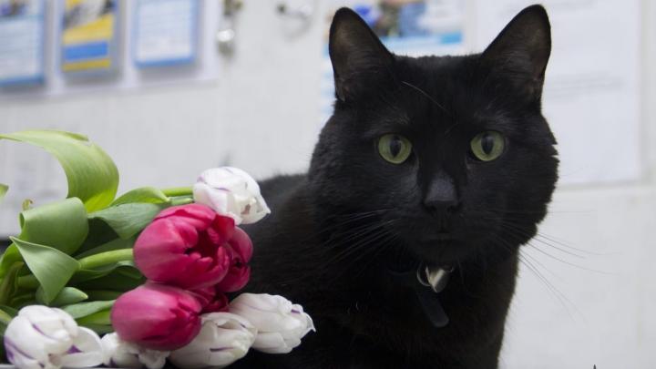 «Люцика больше нет с нами…»: кот-донор пермской ветеринарной клиники умер после болезни