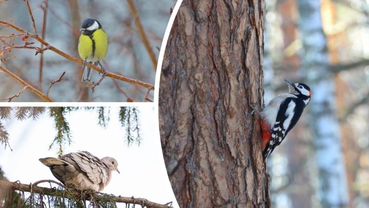 Дятел в гостях у белки и важный грач: показываем интересных и забавных птиц в Тюменской области