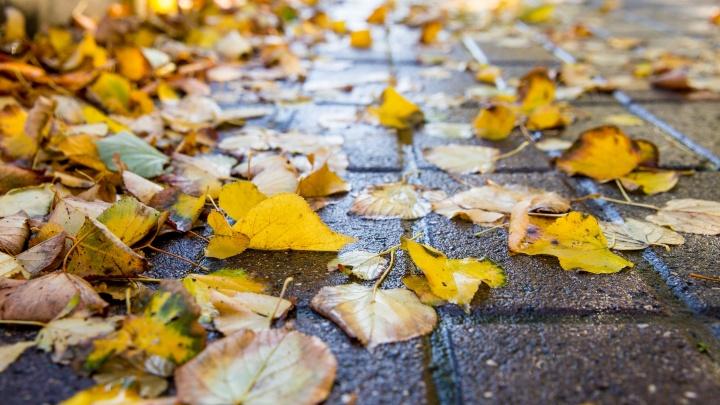 После бабьего лета резко наступит зима: ярославцам рассказали об аномальной погоде в октябре
