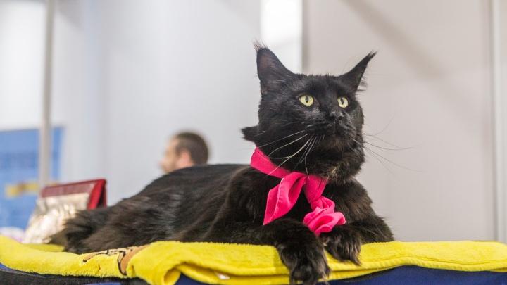 «Используются в ритуалах»: приюты решили не отдавать черных котов перед Хеллоуином
