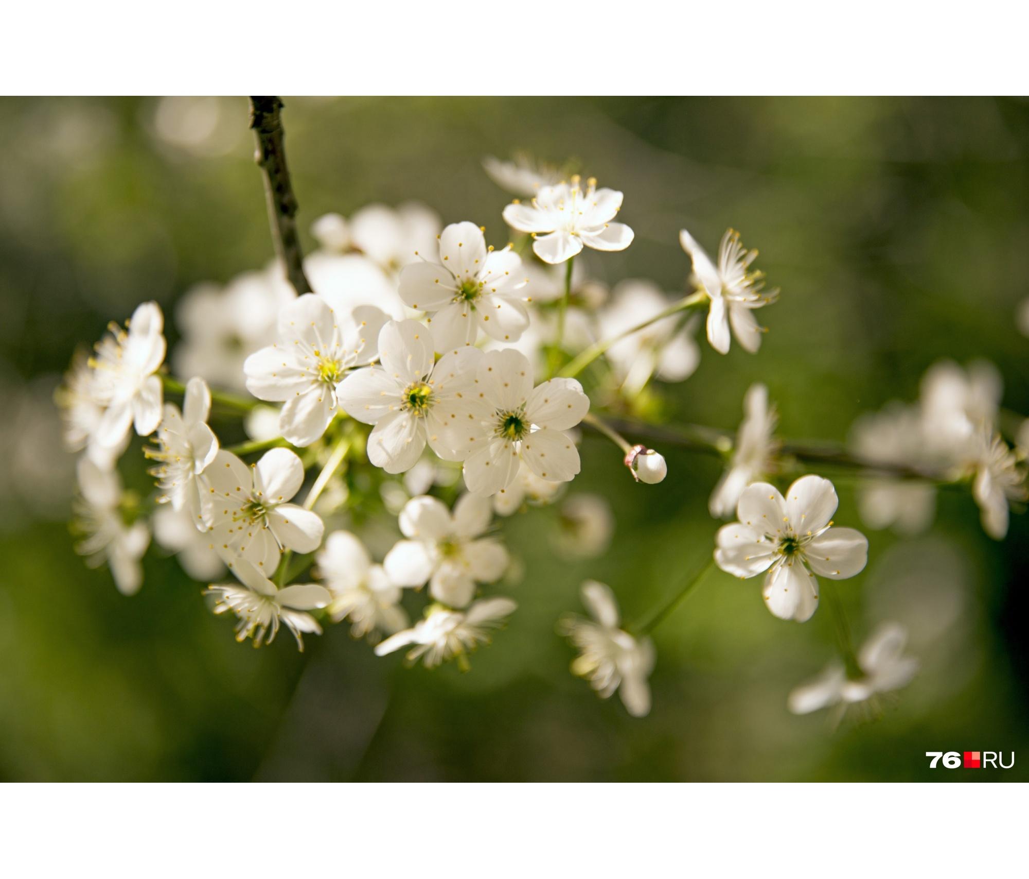 Март в Ярославле будет тёплым, весна — ранней
