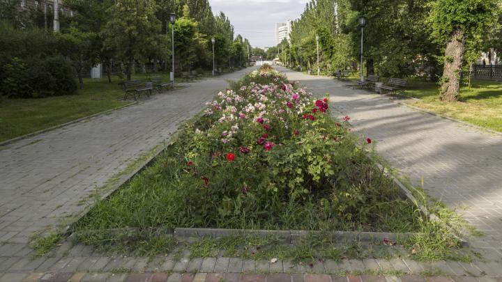В центре Волгограда зарастает травой бульвар на проспекте Ленина
