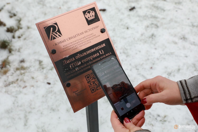 Считав QR-код, можно получить информацию о дереве