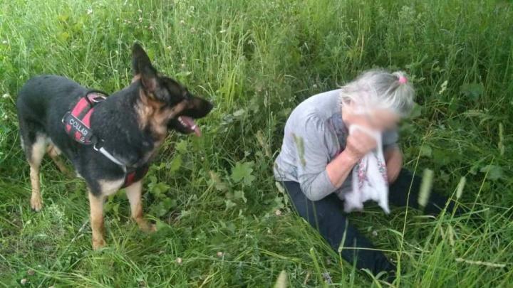 Нашла собака: в Ярославской области из леса вывели заблудившуюся пенсионерку