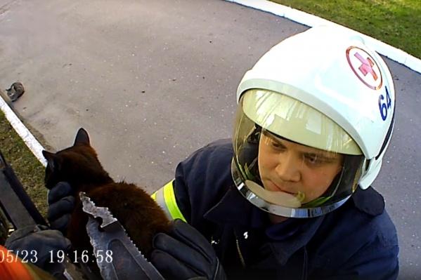 Кошка застряла в заборе на улице Теснанова