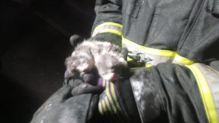 Во время крупного пожара в саду у ЕКАД спасли двух маленьких котят