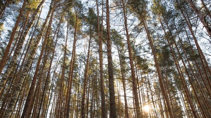 Ярославцам запретили ходить в лес