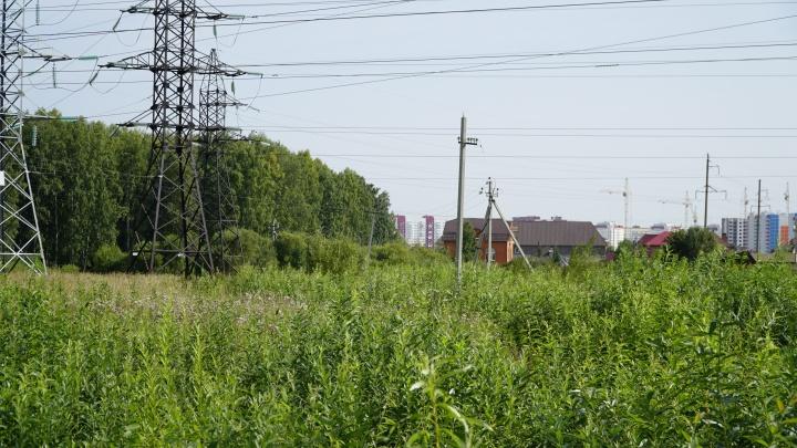Инициативная группа не смогла отстоять парк «Тополя» под Тюменью. Вместо деревьев будет дорога