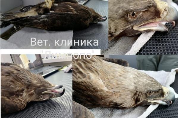 Птица притворяется мертвой, потому что боится приближающихся врачей