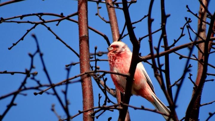 Из-за коронавируса в омском парке поселились 11 новых видов птиц