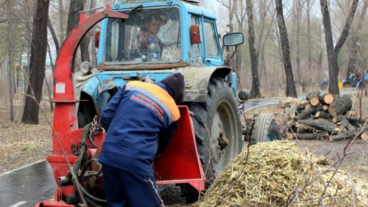 Для строительства детсада в посёлке Биофабрика вырубят 511 деревьев