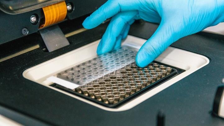 Коронавирус в Кузбассе: диагноз подтвердился ещё у 13 человек