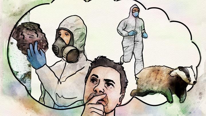 Люди скупают чагу и барсучий жир для лечения ковида. Мы узнали, помогут ли эти средства (вы удивитесь)