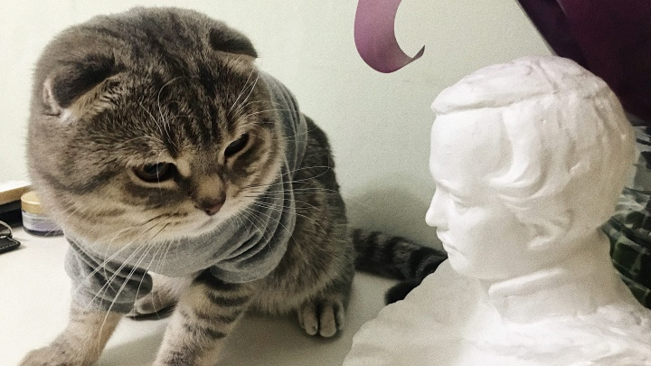 Котики и собачки в самоизоляции: любуемся питомцами тюменцев, которые сидят на карантине