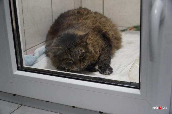 Кот находился в кислородной камере