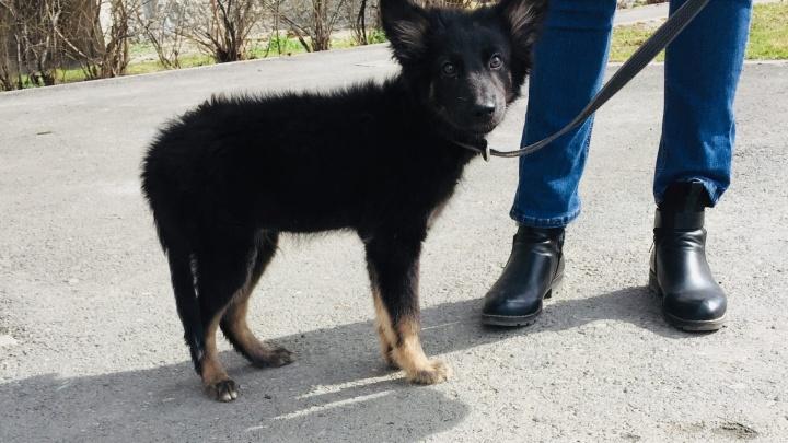 В Тюмени с растаявшего озера спасли щенка. Он провалился под воду