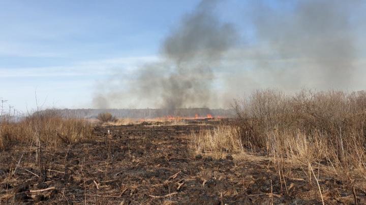 Огонь окружил дорогу: под Тюменью загорелось поле