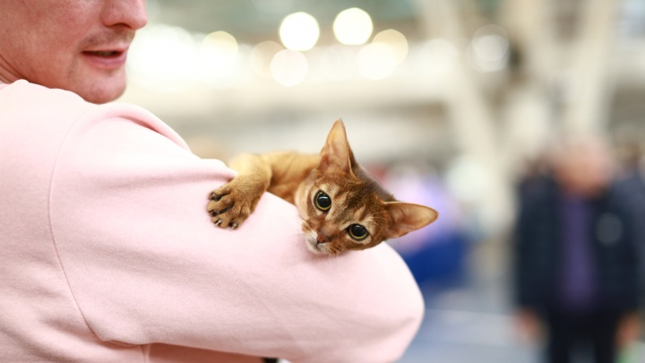 Точное попадание в сердце: фоторепортаж с уральской выставки кошек, от которого зашкалит мимиметр