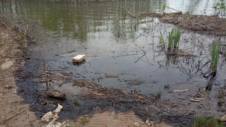 Берега почернели: в реку Самару сливали мазут