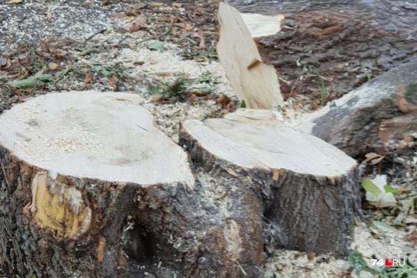 Старые деревья спилят на Труда, Елькина, Тимирязева и Худякова