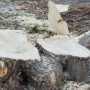 В Челябинске вырубят несколько сотен деревьев и кустарников ради строительства двух детских садов