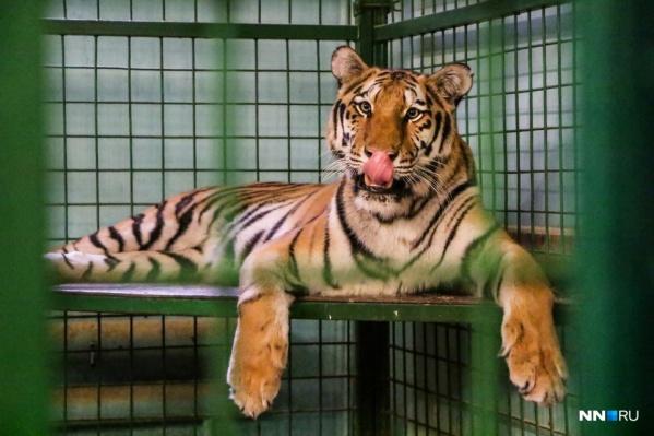 Как нам сказали в цирке, на жизнь звери не жалуются. Правда, скучают по зрителям