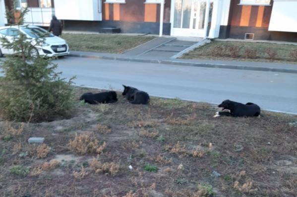 Догхантеры не жалели даже неагрессивных собак