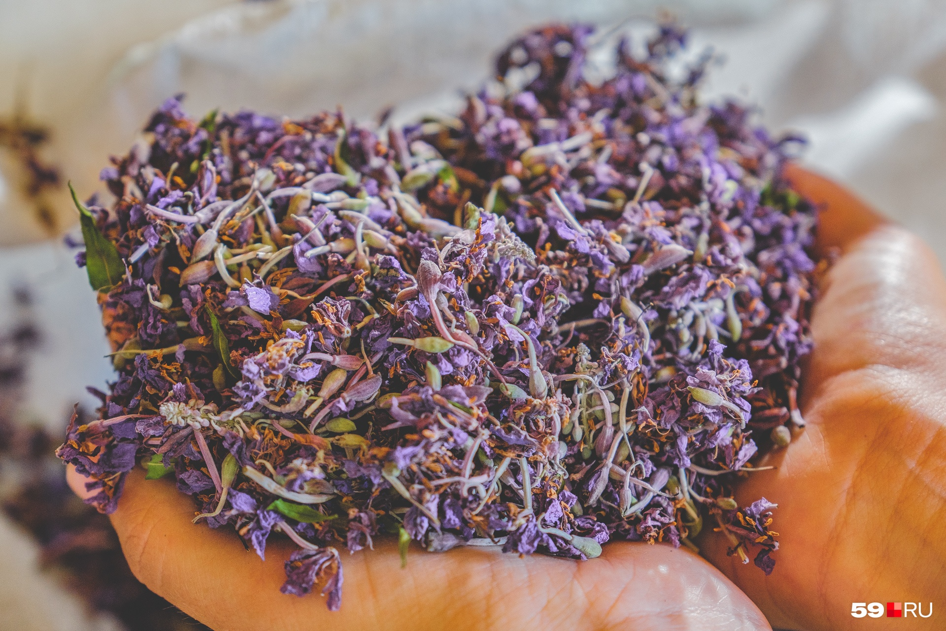 Цветы иван-чая используют как добавки, напиток получается из правильно высушенных листьев