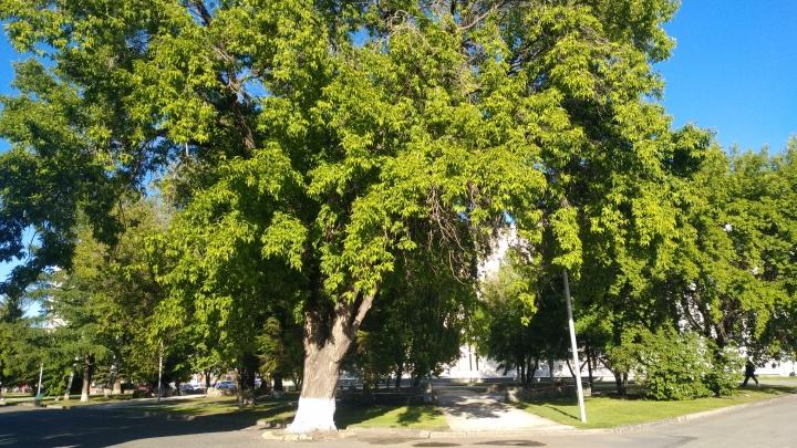 В Зауралье аномально жаркая погода задержится до конца выходных