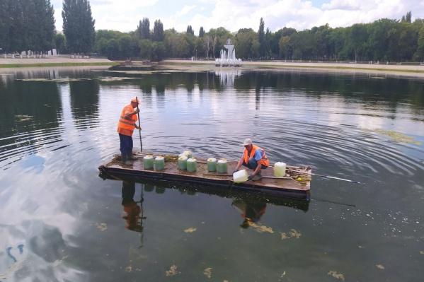 В озеро вылили 100 литров биологического препарата