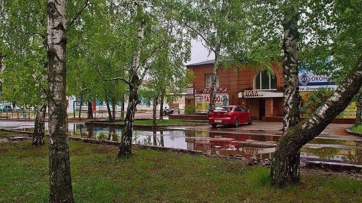 Не хотим жить в царстве плитки: в Урюпинске массово вырубают деревья