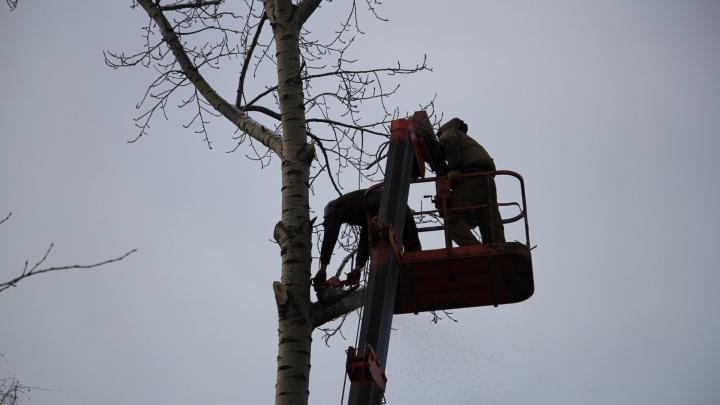 В Соломбале за 348 тысяч рублей сведут 48 деревьев