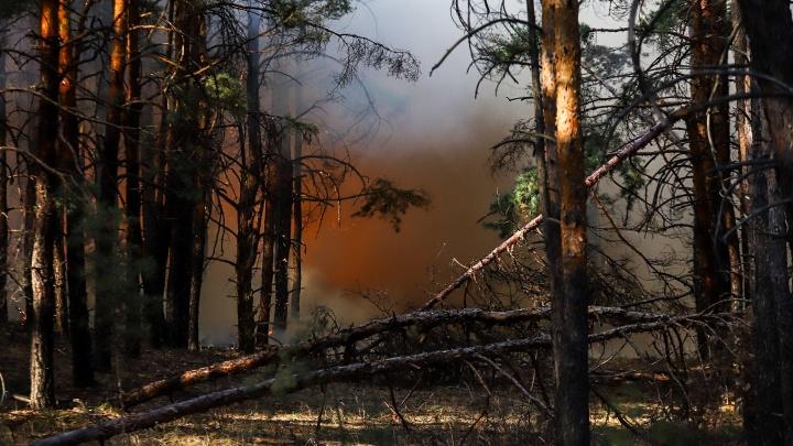 Площадь пожара в Тарасовском районе превысила 800 гектаров