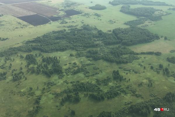 В Курганской области к 12 августа не зафиксировано лесных пожаров