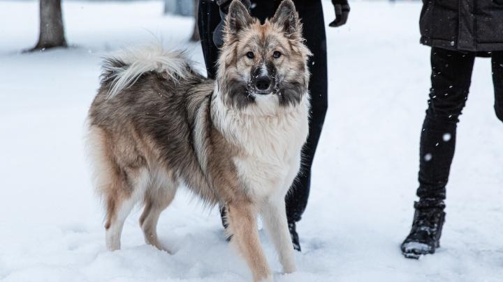 В декабре в Кузбасс придут морозы до -40 градусов. Изучаем точный прогноз синоптиков на месяц