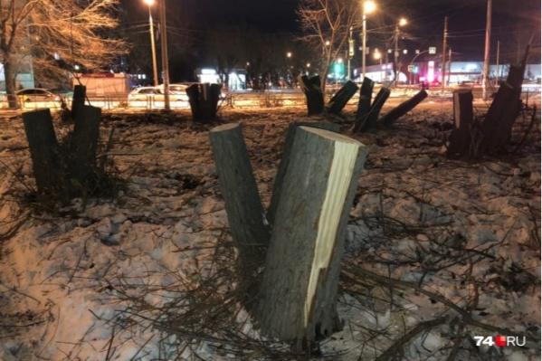 Тариф на вырубку деревьев в Челябинске увеличили в два раза