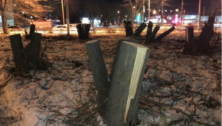 В Челябинске ужесточили правила сноса и высадки деревьев